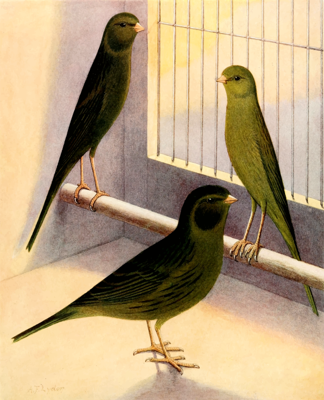 Green canaries