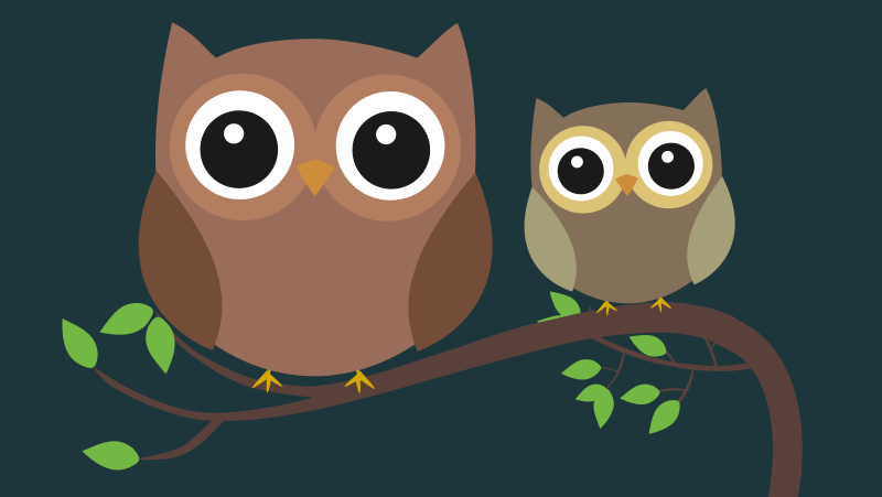 Two owls at night