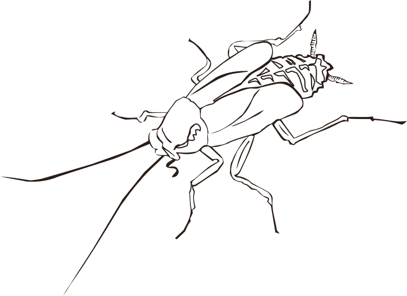 Cockroach (outline)