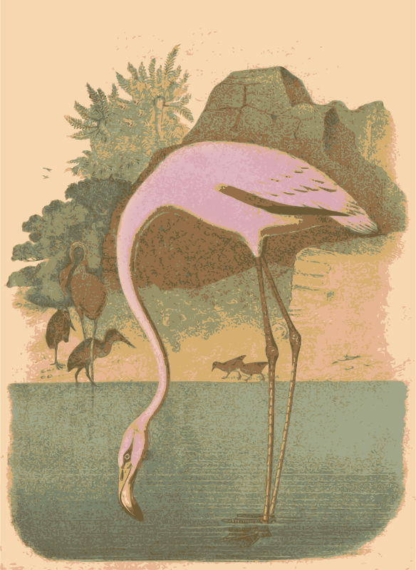 Retro Flamingo