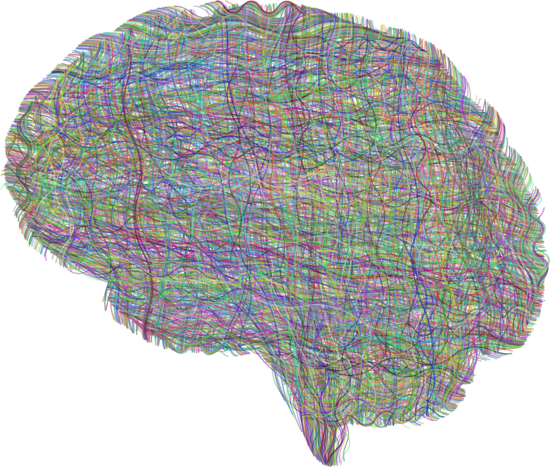 Dense Neural Brain Prismatic