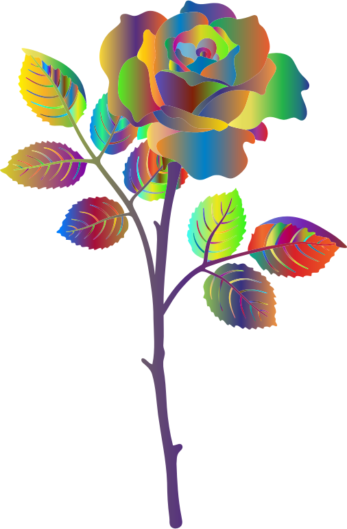 Polyprismatic Rose