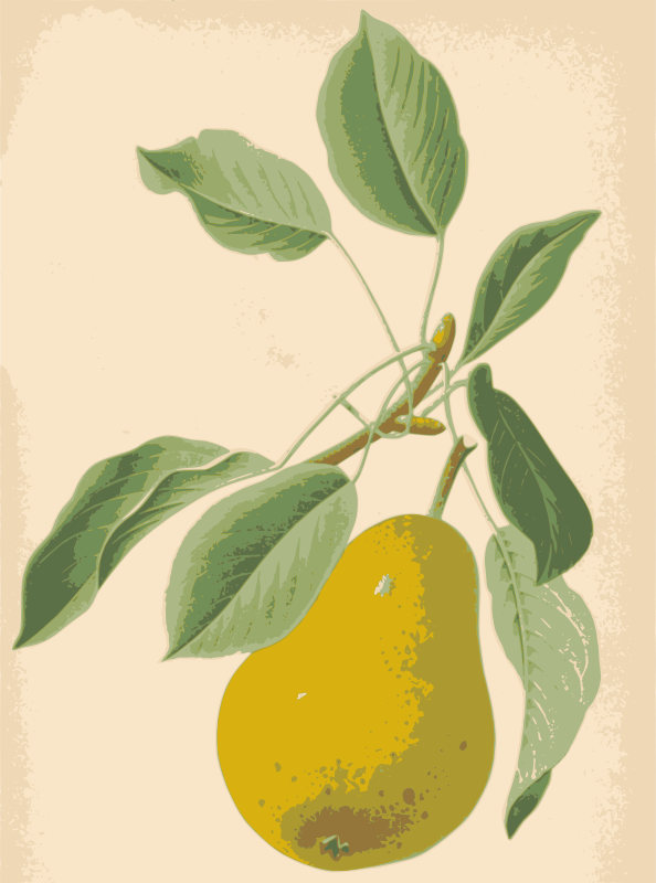 Pear and Leaves