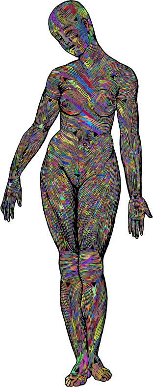 Muscle Fibers Woman Polyprismatic