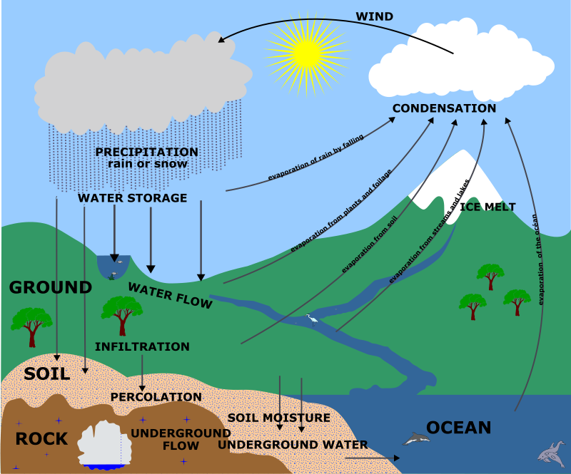 Water Cycle - English