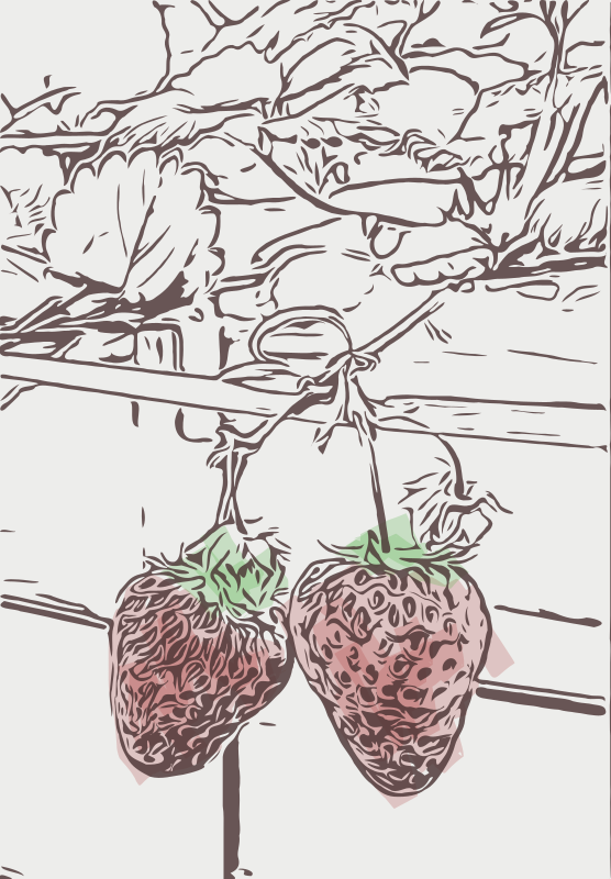 Strawberries - Abstract