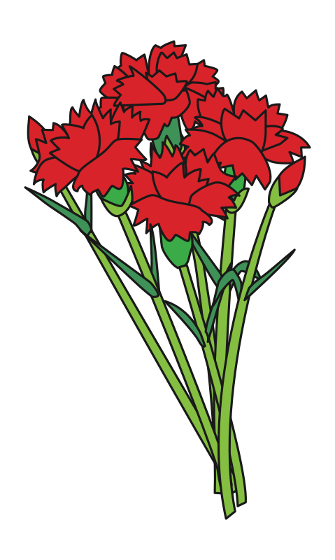 Carnations Bounquet Flowers