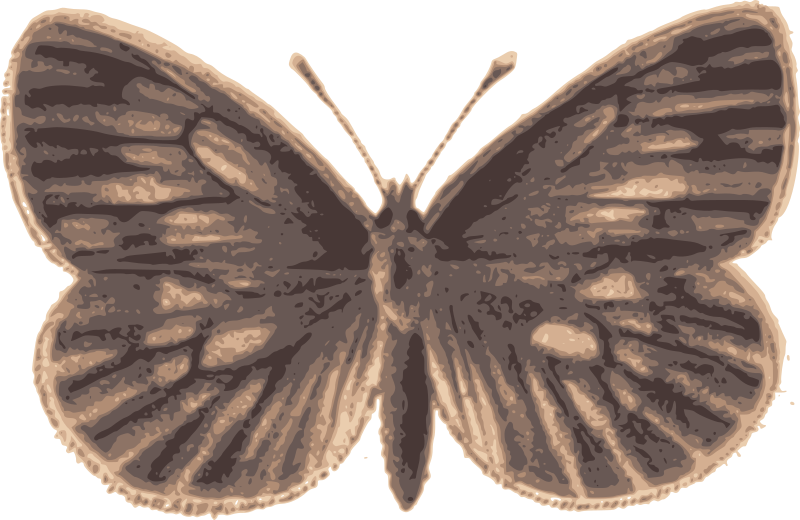 Brown Buttefly
