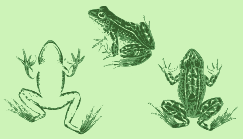 Three Frog Views