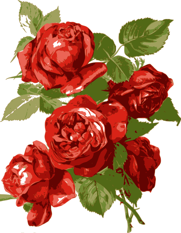 Simple Red Roses