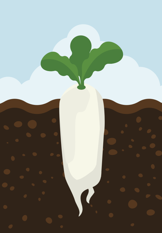 Cartoon Daikon Radish