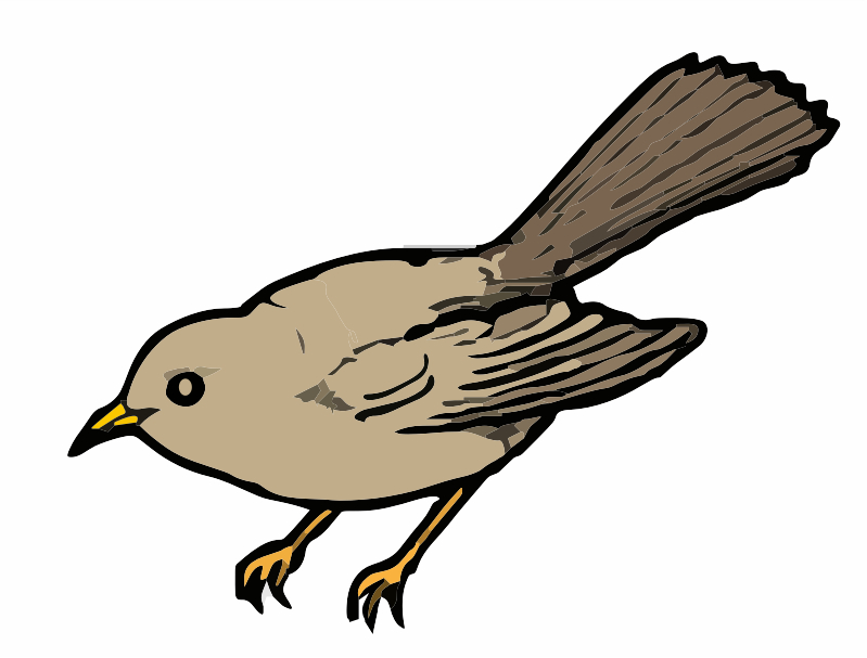 A brown bird
