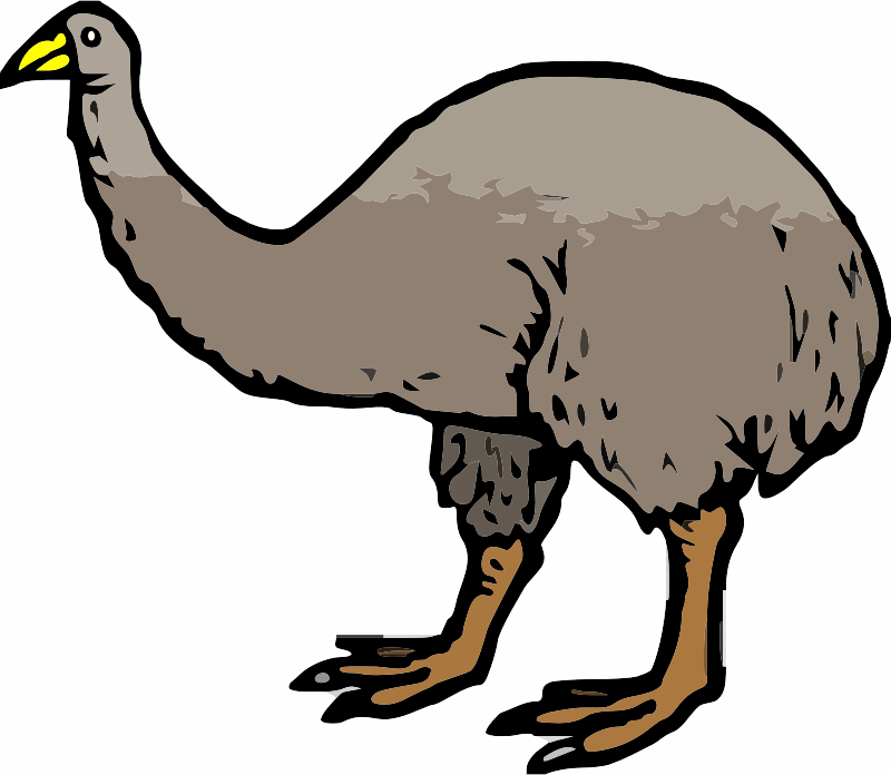 A brown Moa Bird