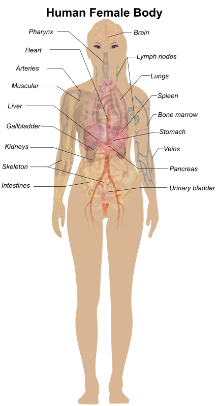 Female Body Diagram