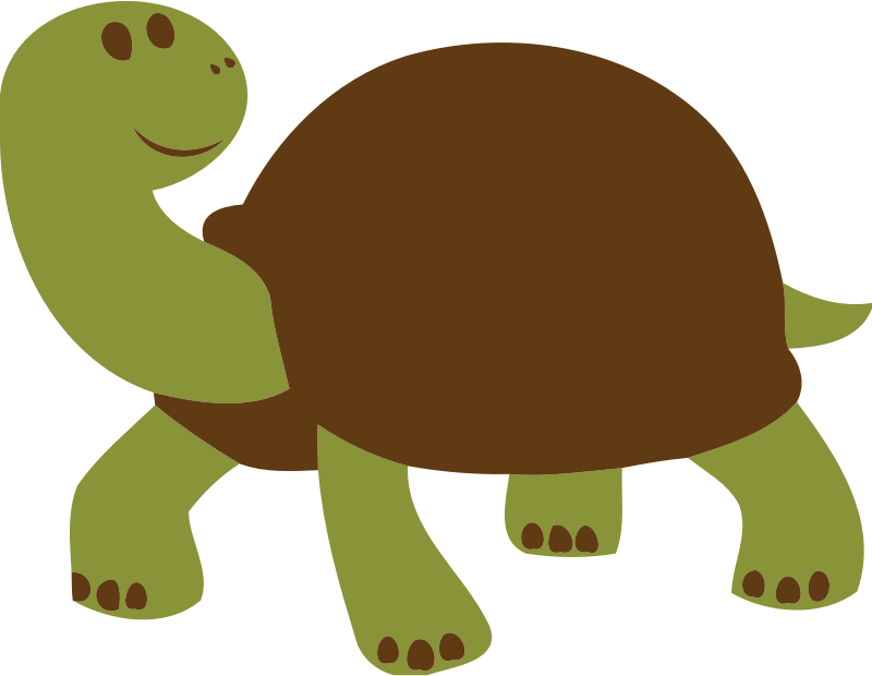 friendly turtle or tortoise