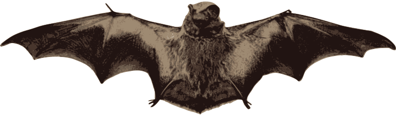 Bat with Wings