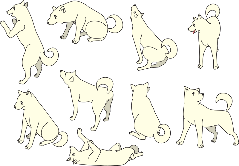Shiba Inu Dog Collection (different poses)