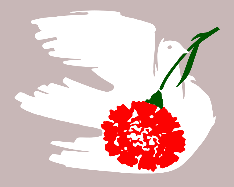Dove with carnation