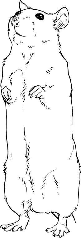 rat standing on hind legs