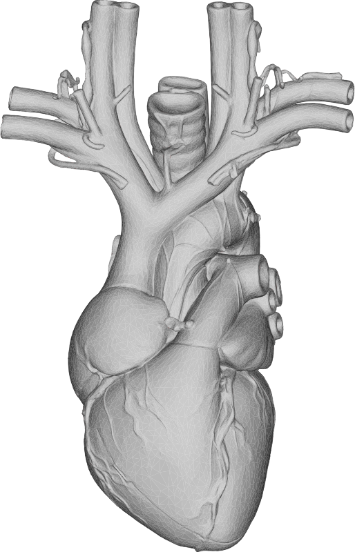 Anatomical Heart 3D