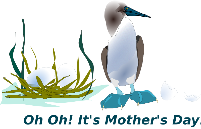 Sea Bird by Reedabadeeda - Blue footed Booby.This is the original mother's day card.