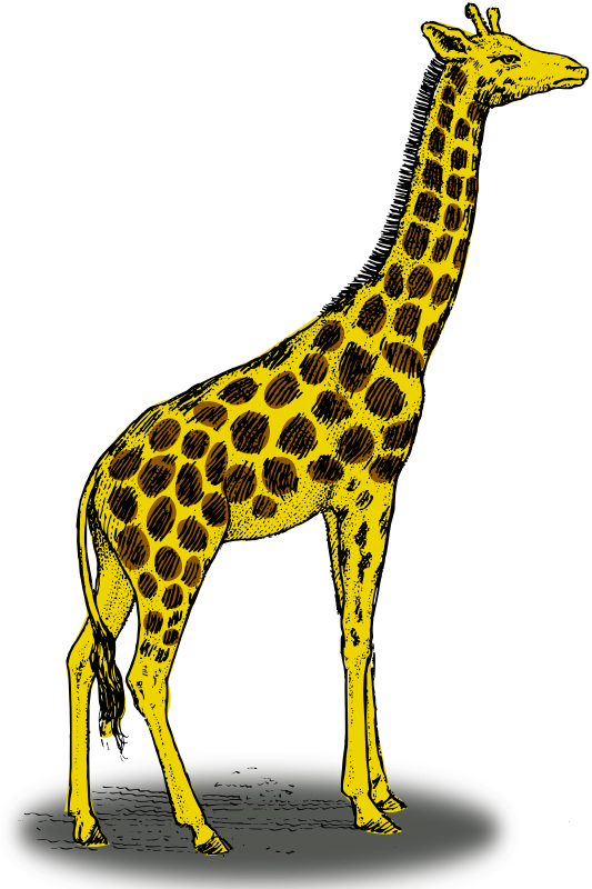 Colored giraffe by pitr