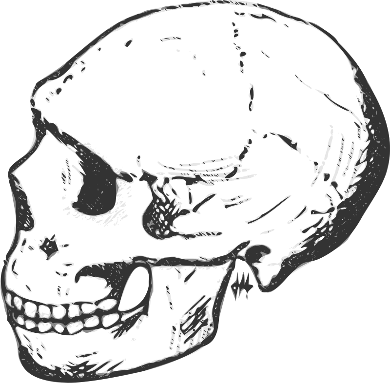 Amud skull (grayscale) by liftarn - Neandertal skull so-called Amud-1, in the Carmel Range (Israel). cc. 50,000 BC.