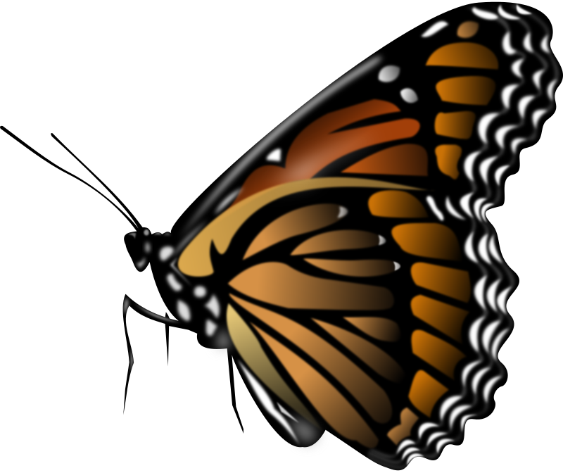 Monarch Butterfly by Merlin2525 - A Monarch Butterfly drawn with Inkscape. I don't know why Open Clip Art does not render the image properly in the thumbnail preview. If anyone knows how to fix this please let me know. Thanks!