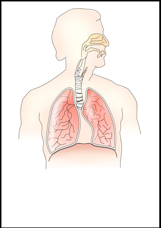 respiratory system 2 by TheresaKnott