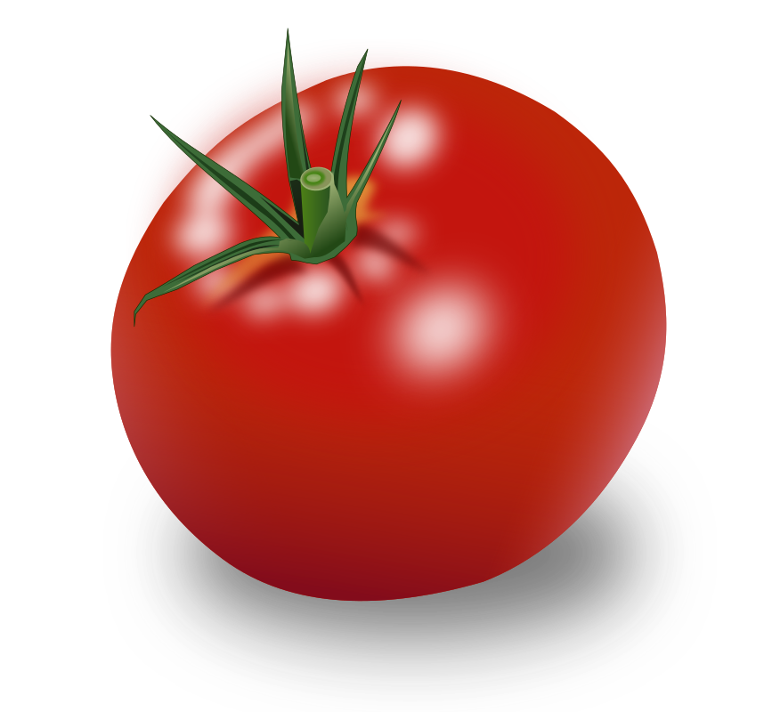 Tomate by marauder - Solanum made in 10 Minutes with Incscape.