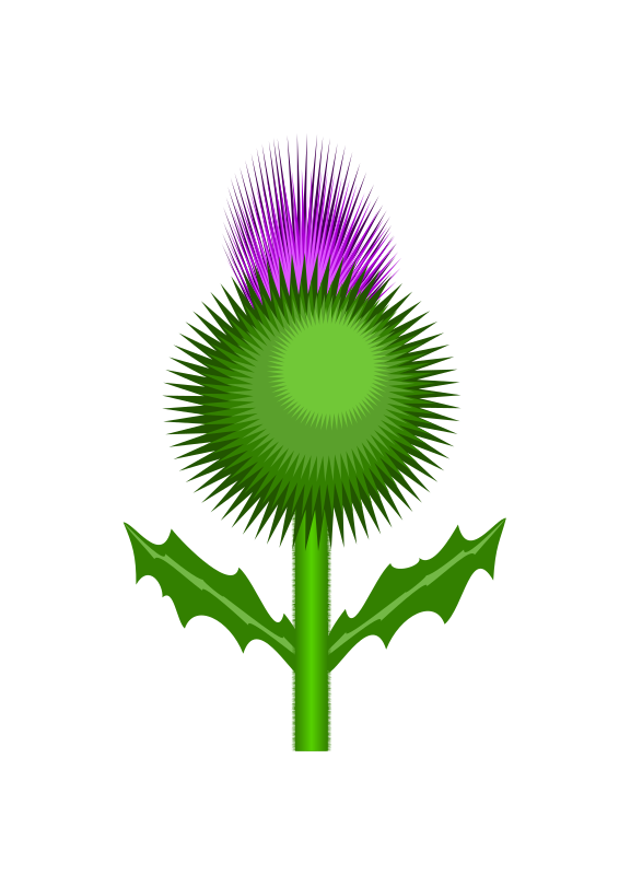 Clipart - Scottish Thistle