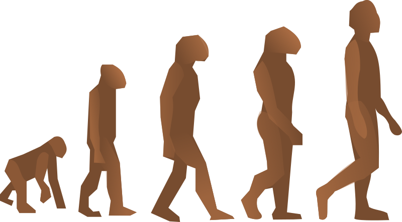 evolution steps by Anonymous