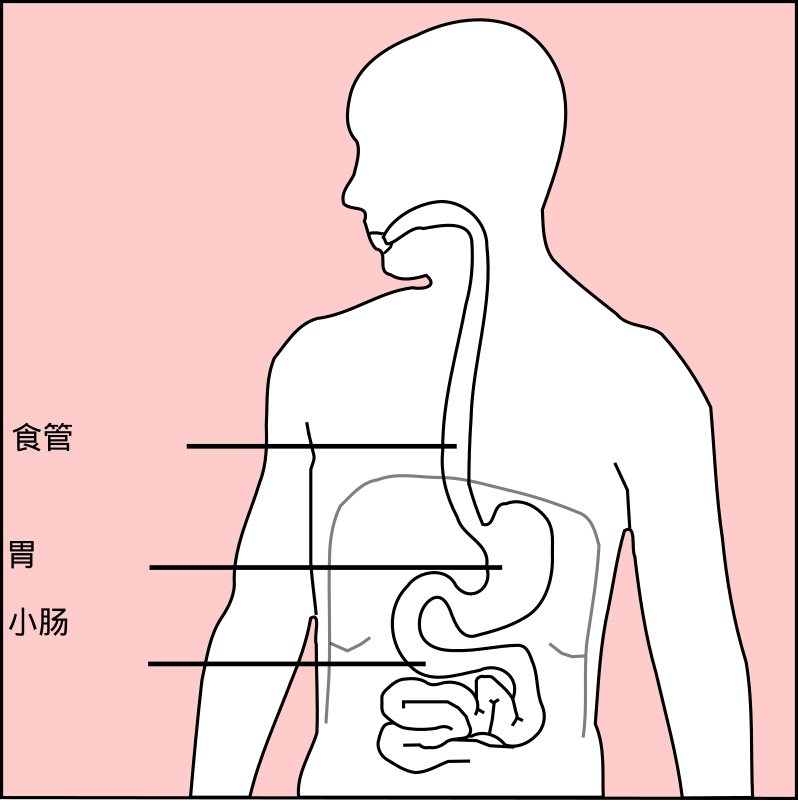 Stomach With Chinese by chudq - Updated the words with Chinese translation