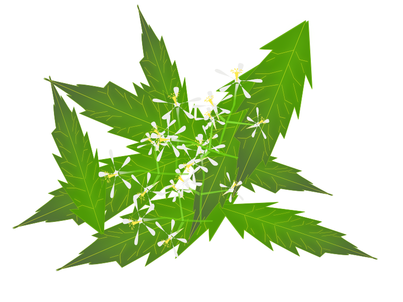 Clipart - neem by NetAlloy