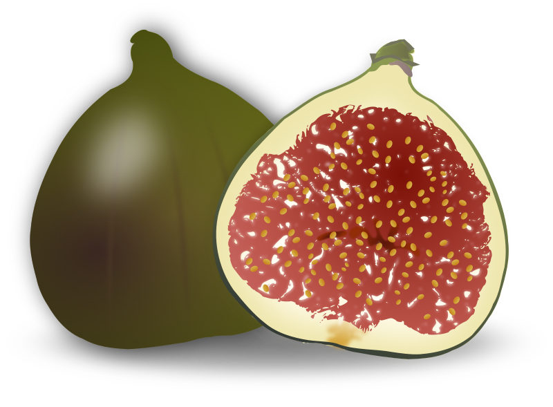 Fig Fruit by gnokii