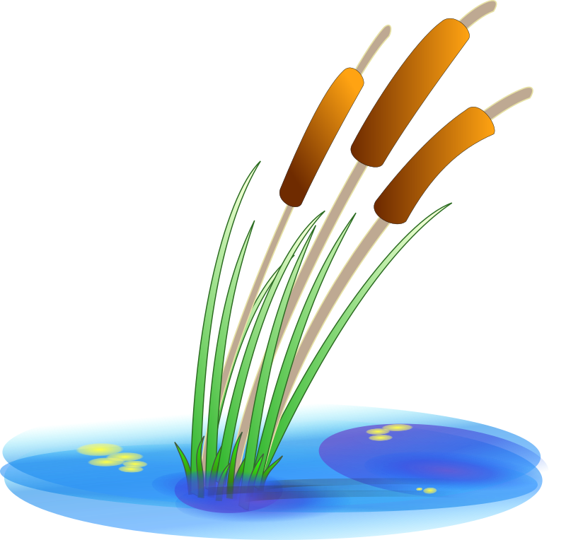 reed by Anonymous - Reeds in water with grass blowing.