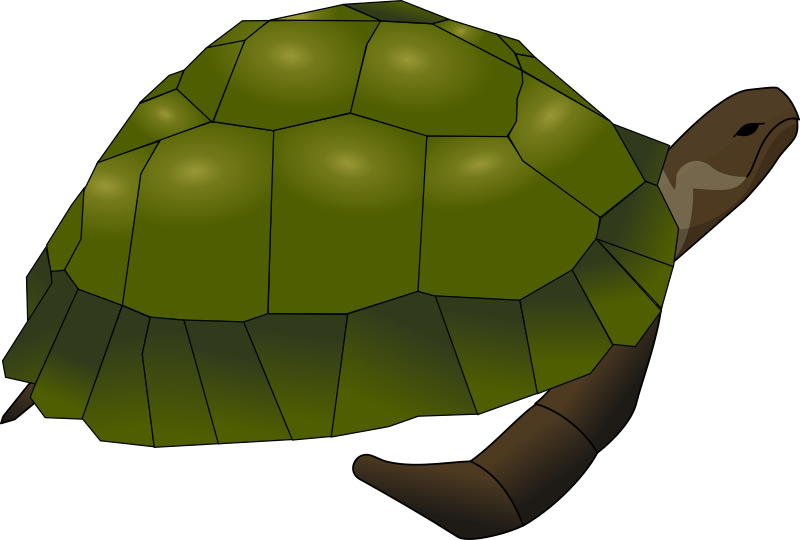 turtle by Anonymous -