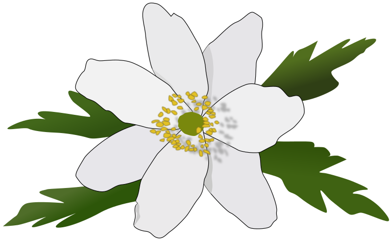 Anemone Nemorosa by pesasa - Anemone Nemorosa for Mother's day