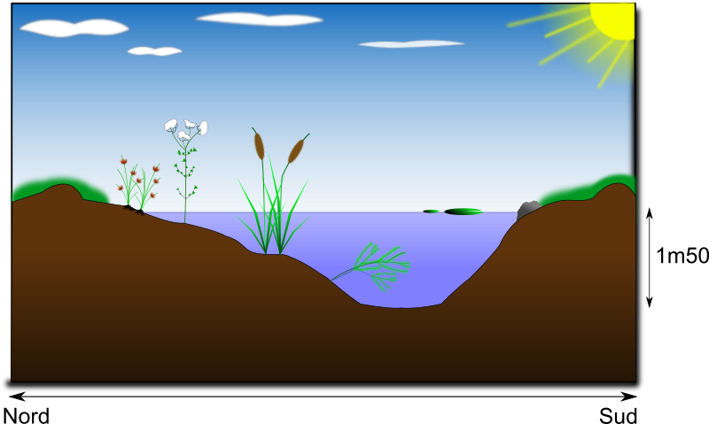 mare naturelle - natural pond by nbcorp - Schema d'une mare naturelle - Schema of a natural pond