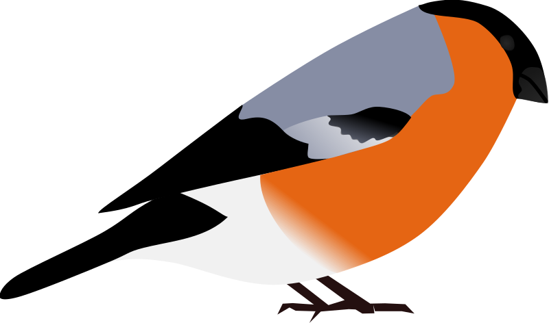 "bullfinch by artokem - A simple depiction of a bullfinch, ""Pyrrhula pyrrhula"""