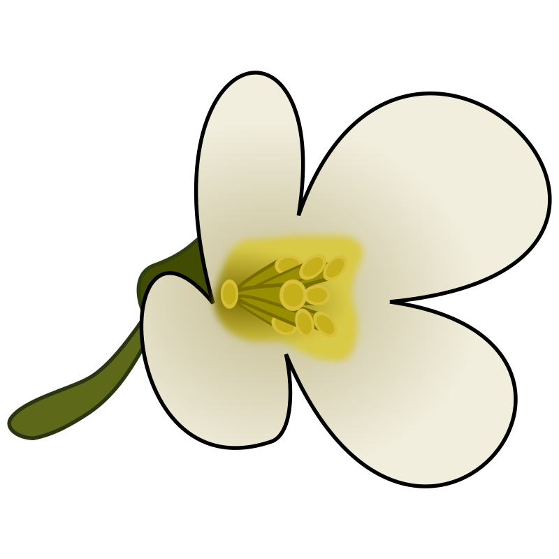 Thaliana Flower by gringer - An arabidopsis thaliana flower, created using inkscape 0.48.1.
