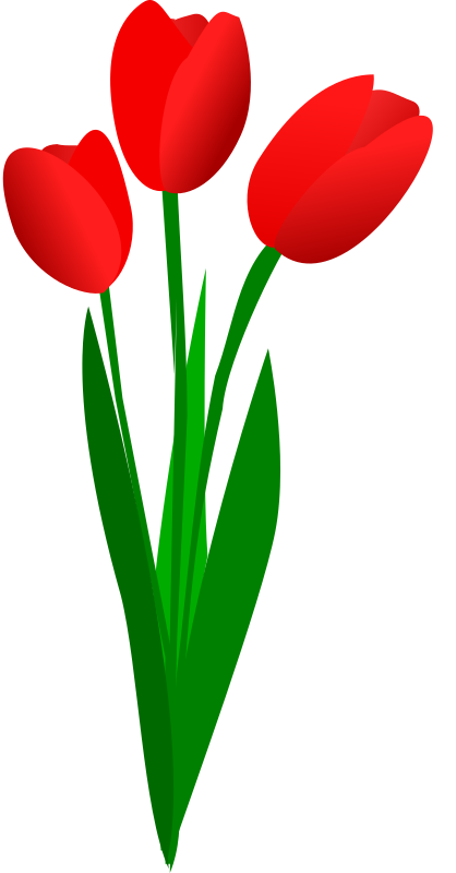 three red tulips by OlKu - Tulips looking pretty