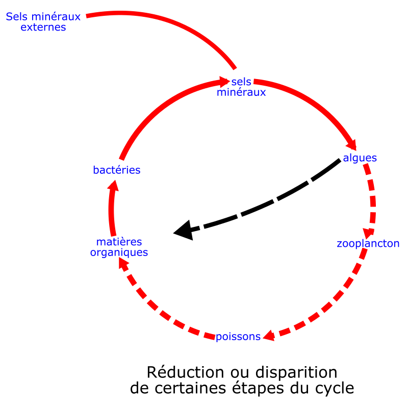 eutrophisation cycle by laurent - eutrophisation