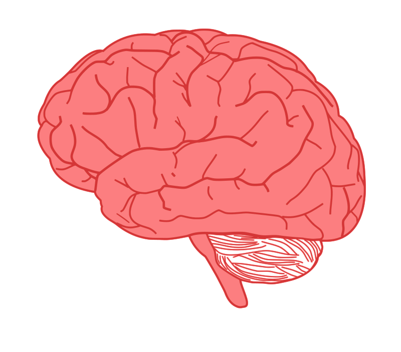 brain in profile by pearish