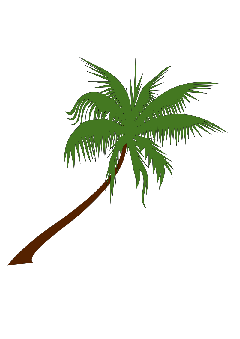 palm tree by newt