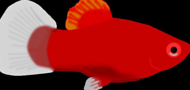 clipart aquarium fish xiphophorus maculatus aquarium clip art black and white aquarium clip art black & white