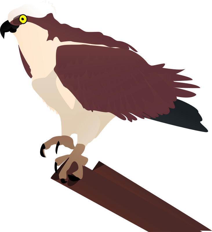 osprey by johnny_automatic - just the bird without the background and text