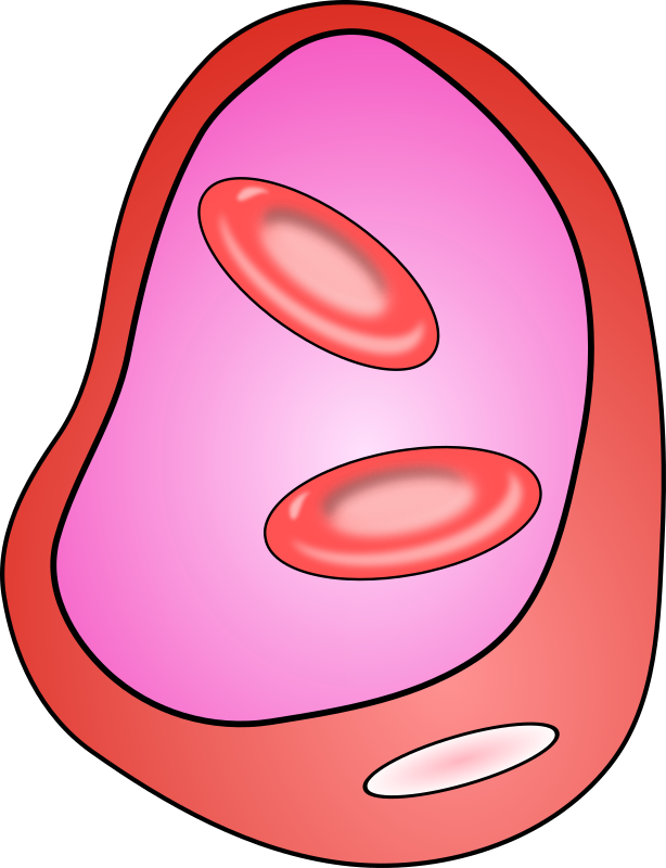 blood vessel with erythrocites by jetxee - Cross-section of the blood vessel with two erythrocites visible. Inspired by Nature's illustration.