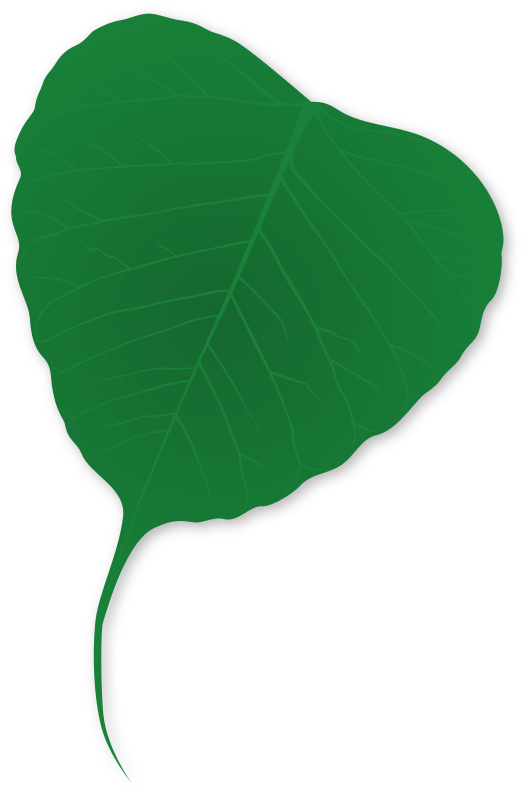 Ginko leaf by Onsemeliot - A shaded green ginko leaf with a detailed structure and shaddow.