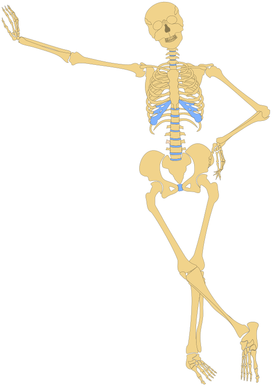 Human Skeleton(Outline) by metalmarious - Its an outline of a human skeleton with the right hand leaning on a wall and the left hand on its hip.